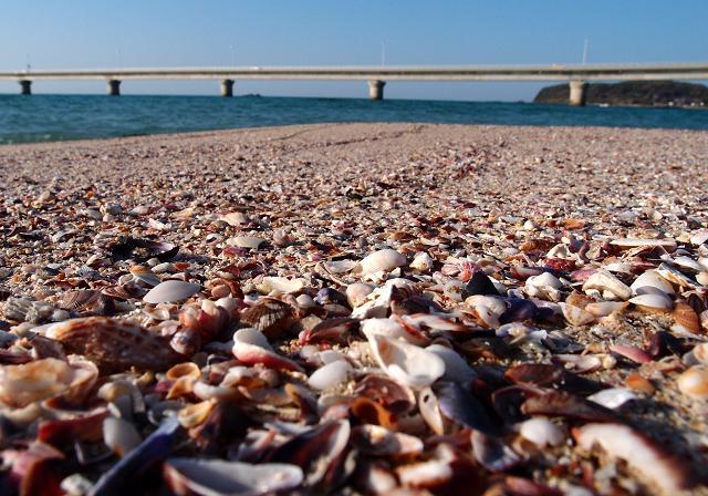 砂と貝の海岸.JPG